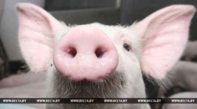 2018-10-Belarus-has-restricted-pork-import-from-China.jpg