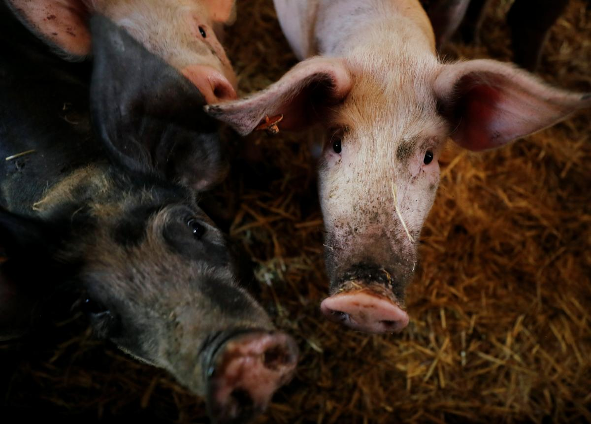 Ukraine-has-increased-pork-imports.JPG